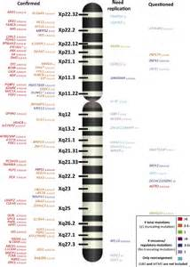 On the Y Chromosome Genes
