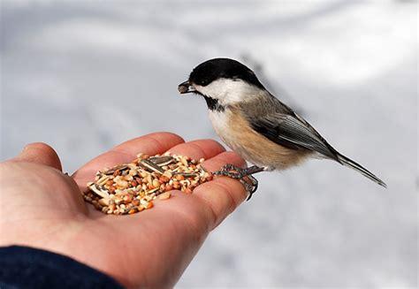 indirectly feeding the birds helping you harmonise
