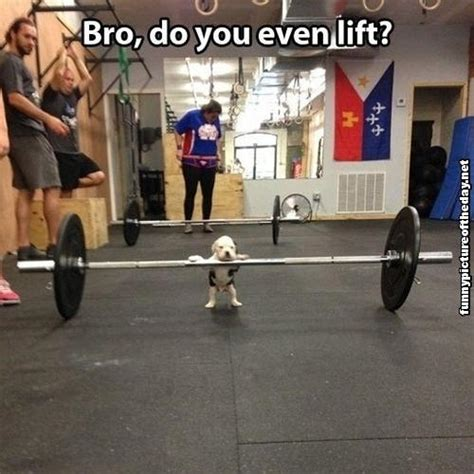 Do You Even Lift Bro Meme - when i grow up i want to be strong fit fast everybody s kung fu fighting