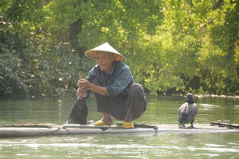 pesca  cormoranes en guilin china imagenes  guia de