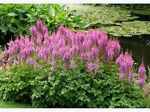 Schnell Wachsende Laubbäume Für Den Garten : robuste stauden f r den garten mein sch ner garten ~ Michelbontemps.com Haus und Dekorationen