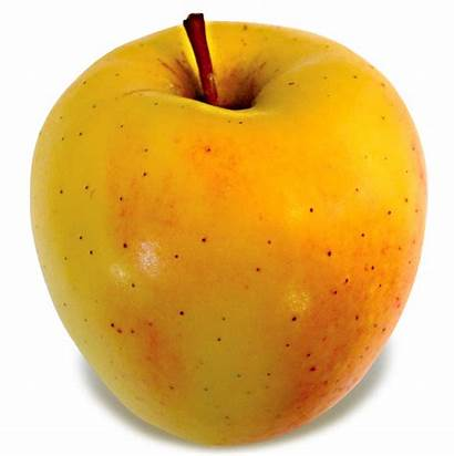 Delicious Golden Apples Apple Tale Lois Weeks