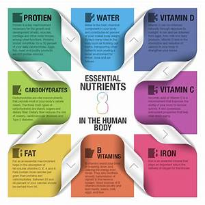 8 Essential Nutrients Of The Human Body