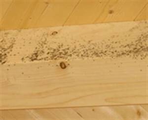 Schimmel Auf Holz : schimmelpilzbefall am geb ude im bestand sanierung durch beseitigung der ursache schimmel ~ Frokenaadalensverden.com Haus und Dekorationen