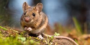 Können Mäuse Klettern : junior tierlexikon f r kinder tiere von a bis z junior die kinderzeitschrift ~ Markanthonyermac.com Haus und Dekorationen