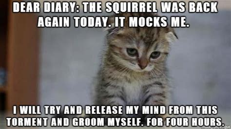 sad cat diaries are officially the funniest thing ever
