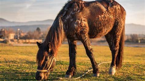 haeufige fellprobleme beim pferd tiergesundde
