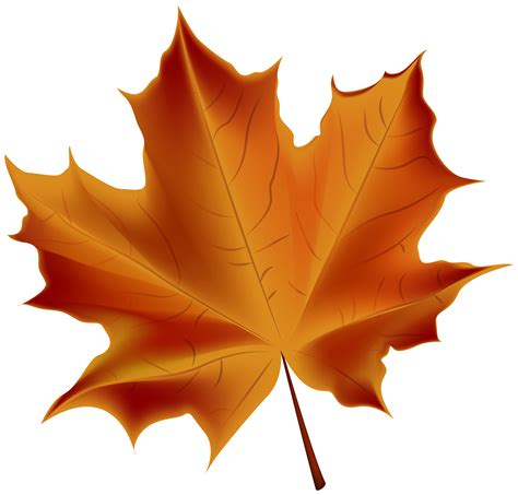 Beautiful Red Autumn Leaf Transparent Png Clip Art Image