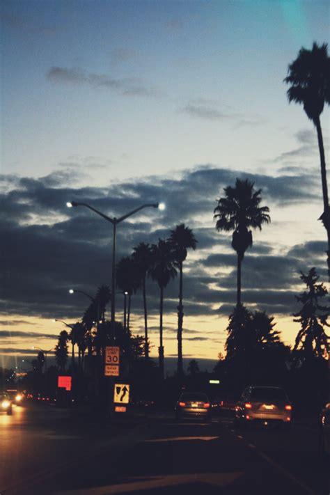 lights summer california color palm trees sluts