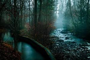 Nature, Photography, Landscape, Dark, Trees, Mist, Plants, Flowers, Fall, Rocks, River, Water