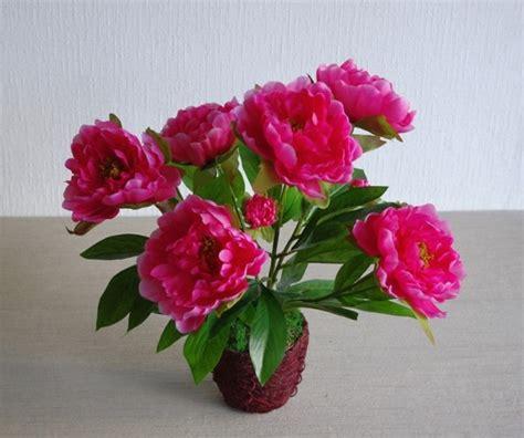 arrosage fuschia en pot 28 images pots 192 plantes de