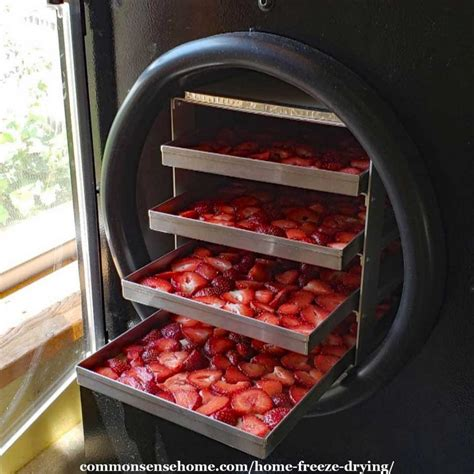 home freeze drying read    buy  freeze dryer