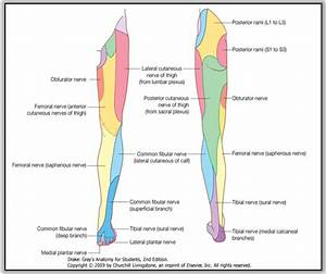 Lower Extremity  Day 1  Flashcards