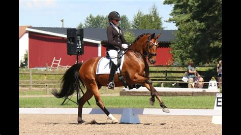 dressage fei pony