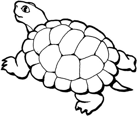 printable animal turtle coloring pages