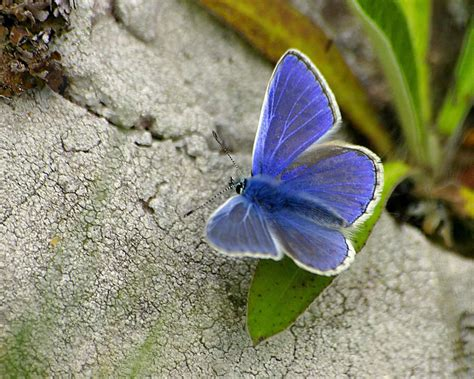3d Wallpapers Butterfly by Wallpapers Background Butterfly Hd Wallpaper Butterfly