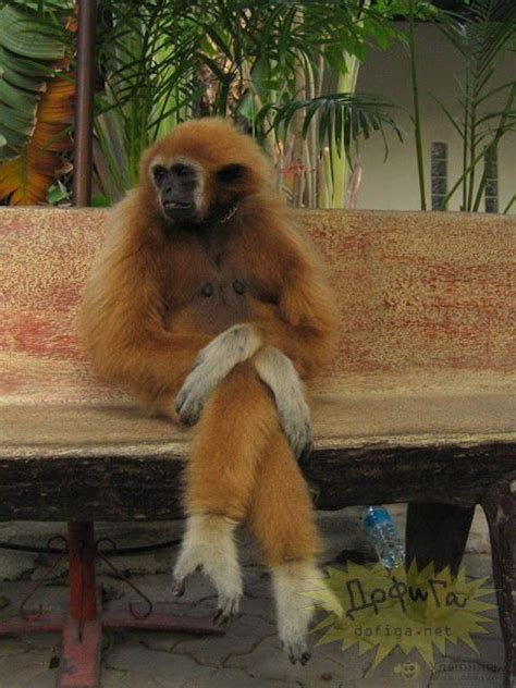 funny monkey  legs crossed luvbat