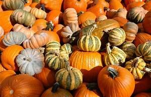 Pumpkin Patch Homer Glen