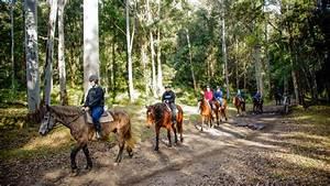 Glenworth Valley discount: $10 off lead pony rides ...