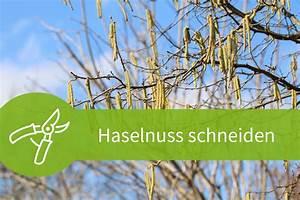 Pflanzen Schneiden Kalender : haselnuss schneiden 3 anleitungen f r ernte pflege und wuchs ~ Orissabook.com Haus und Dekorationen