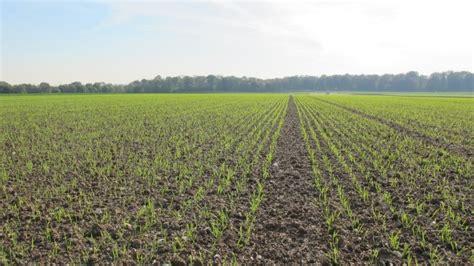 date et densité de semis du blé densité de semis de l 39 orge