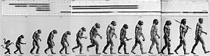What Our Most Famous Evolutionary Cartoon Gets Wrong