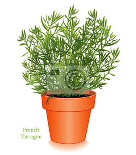 tableau estragon fran 231 ais 224 clay pot de fleurs pour fines herbes cuisine posters et