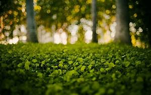 Green, Nature, Grass, Bokeh, Blurred, Background, Wallpapers, Hd, Desktop, And, Mobile, Backgrounds