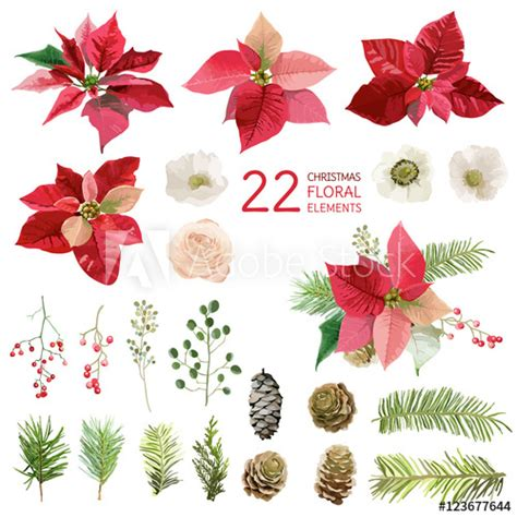 poinsettia flowers  christmas floral elements