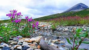 Landscape, Beauties, Of, Nature, Stream, Gravel, Gravel