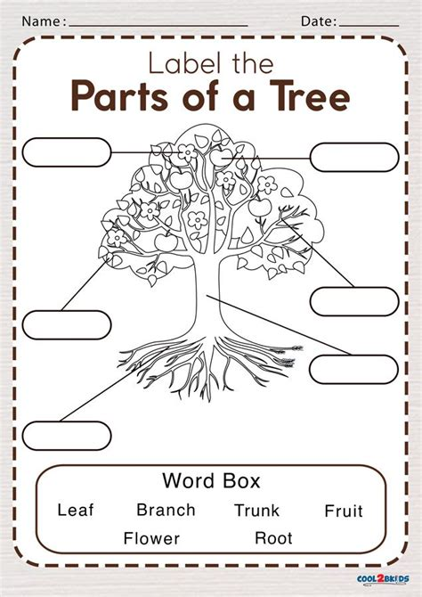 parts   tree worksheet coolbkids   classroom