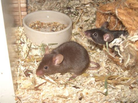 mouse cage  aquarium tank construction