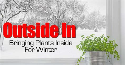when to bring plants inside outside in bringing plants inside for winter