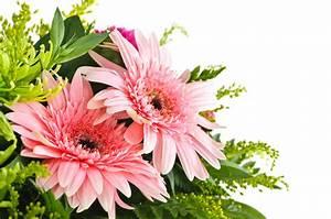 Blumen Bewässern Mit Wollfaden : blumen a z ~ Lizthompson.info Haus und Dekorationen