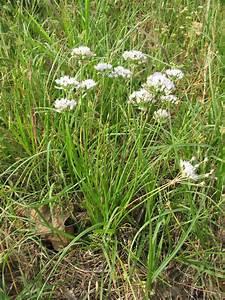 Sensible Survival  Edible Wild Plants