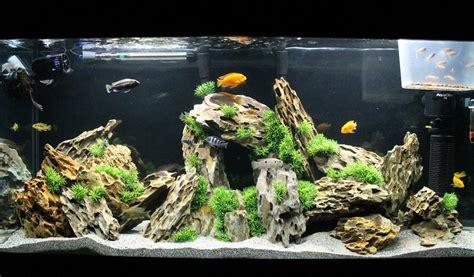 Aquascaping Cichlid Aquarium aquascaping with cichlid enter inspiration