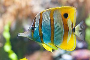 Tips on Moving Reef Tank with Saltwater Fish
