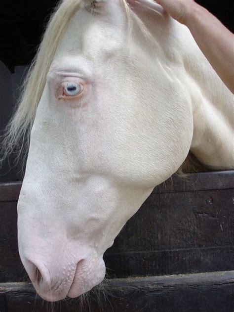 albino animals  stunning   literally gasp