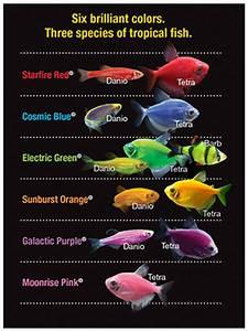 GloFish – Experience the Glo Tetra