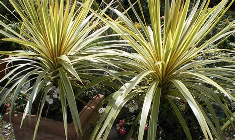 outdoor garden plants ornamental garden plants 1 living props