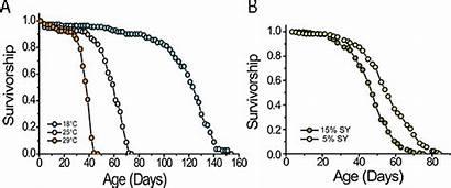 Lifespan Drosophila Melanogaster Jove Adult Flies Measurement