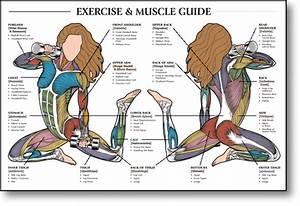 Body Muscles Chart Female
