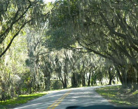 Spanish Moss Sarasota Florida | Photos that I have taken ...