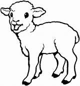 Lamb Sheep Coloring Pages Drawing Laughing Born Bighorn Colouring Printable Sheet Getcolorings Everfreecoloring Coloringsky Getdrawings sketch template