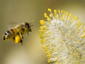 The Best Bee Pollen Supplements For Boosting Vitality In 2020