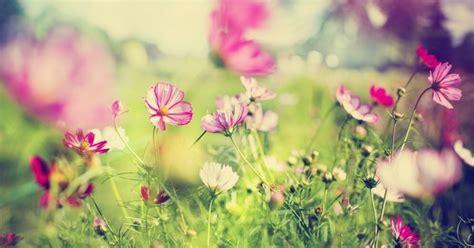 Populārākās izturīgās viengadīgās puķes