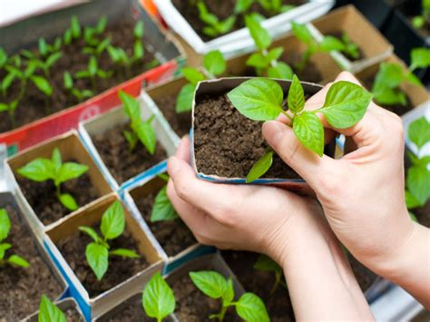 how to set up a garden top 6 tips to set up an indoor garden boldsky com