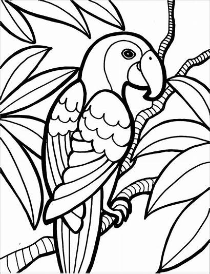 Macaw Coloring Printable Pages Coloringbay