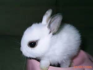 Cute Baby Bunnies Sale