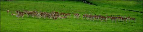 eine große familie eine gro 223 e familie foto bild panorama natur schwarzwald bilder auf fotocommunity